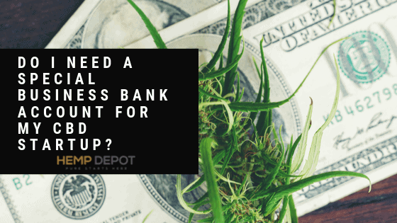 Do I Need a Special Business Bank Account for My CBD Startup?