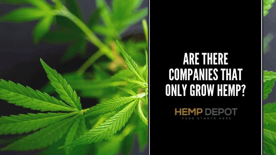 Are There Companies That Only Grow Hemp?