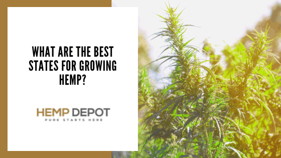 What Are the Best States for Growing Hemp?