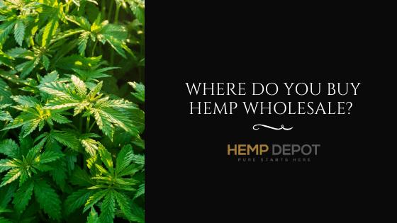 Where Do You Buy Hemp Wholesale?