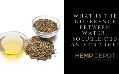 difference water soluble cbd oil