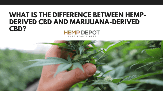 What Is the Difference Between Hemp-Derived CBD and Marijuana-Derived CBD?