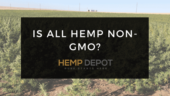 Is All Hemp Non-GMO?