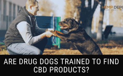 drug dogs cbd