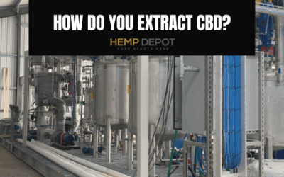 How Do You Extract CBD?