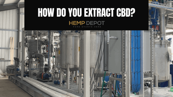 How Do You Extract CBD?