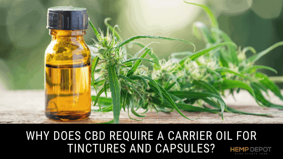Why Does CBD Require a Carrier Oil for Tinctures and Capsules?