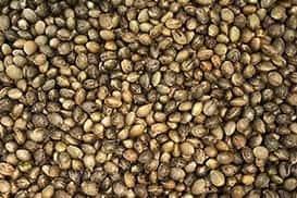 hemp-depot-cbd-hemp-seeds