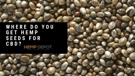 Where Do You Get Hemp Seeds for CBD?