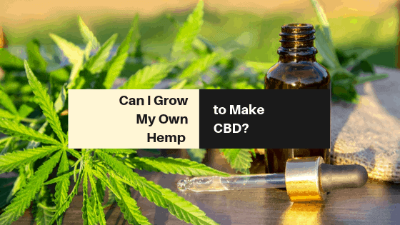 Can I Grow My Own Hemp to Make CBD?