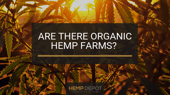 Are There Organic Hemp Farms?