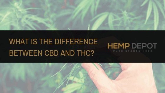 What Is the Difference Between CBD and THC?