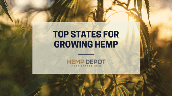 Top States for Growing Hemp