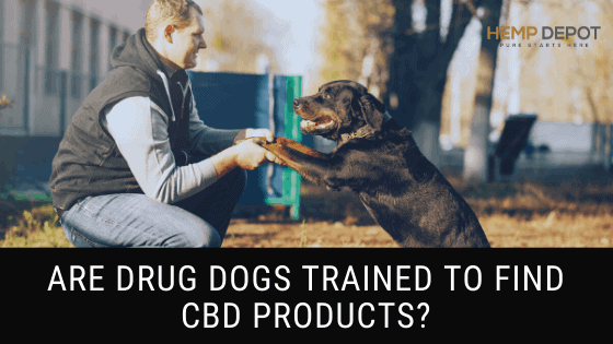 Are Drug Dogs Trained to Find CBD Products?