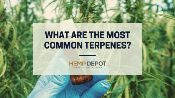 most common terpenes hemp depot